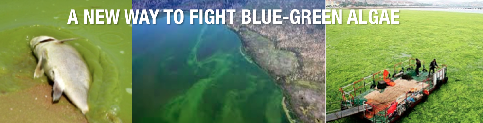 BLUE GREEN ALGAE BANNER